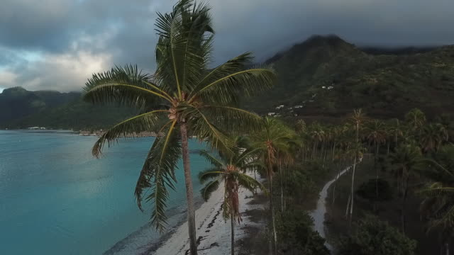 aerial drone view of a luxury resort hotel on a scenic tropical island in french polynesia - insel moorea stock-videos und b-roll-filmmaterial