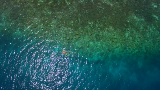 aerial drone view of a man and woman couple snorkeling over a coral reef of a tropical island. - diving flipper stock videos & royalty-free footage