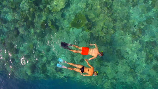 aerial drone view of a man and woman couple snorkeling over the coral reef of a tropical island. - shorts stock-videos und b-roll-filmmaterial
