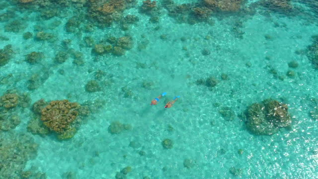 aerial drone view of a man and woman couple snorkeling swimming around scenic tropical islands. - south pacific ocean stock videos & royalty-free footage