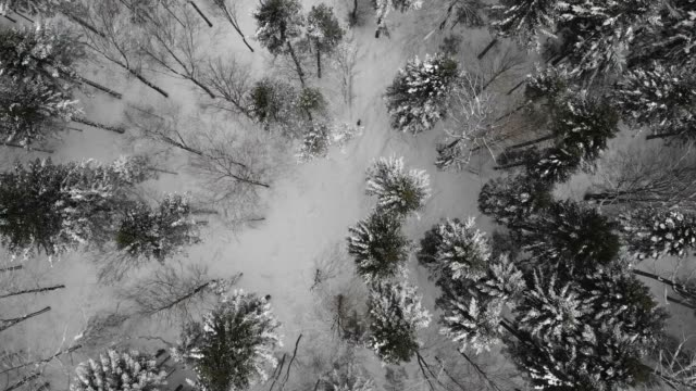 aerial drone view of a snow covered forest and winter trail. - snow stock videos & royalty-free footage