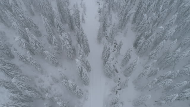 aerial drone view of a snow covered road trail in a forest. - slow motion - zona pedonale strada transitabile video stock e b–roll
