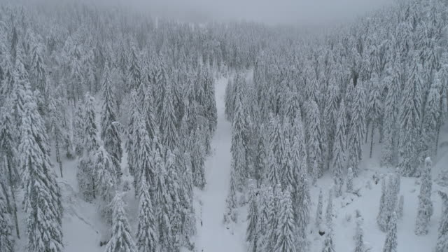 vídeos de stock e filmes b-roll de aerial drone view of a snow covered road trail in a forest. - slow motion - roménia
