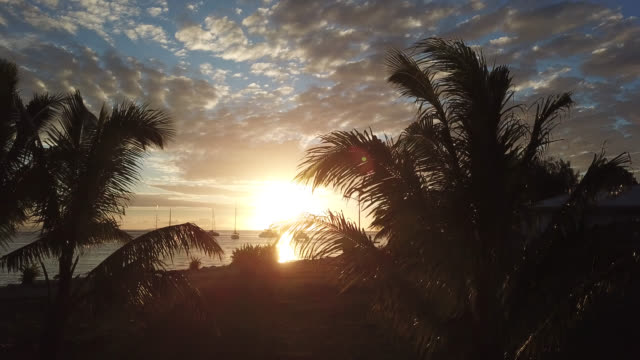 stockvideo's en b-roll-footage met aerial drone view  of a sunset over the sea with sailboats with palm trees in the foreground - huahine