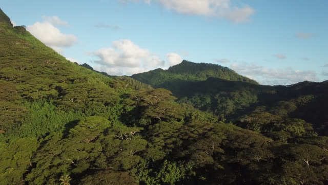 Aerial drone view of a tropical forest on a mountain and houses