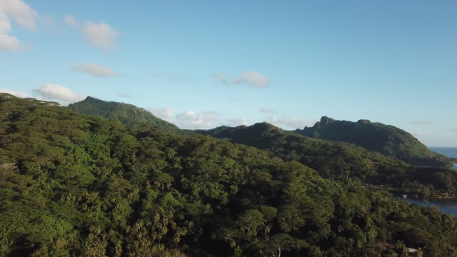 aerial drone view of a tropical forest on a mountain and the sea - huahine island stock videos and b-roll footage