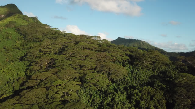 Aerial drone view of a tropical forest on a mountain