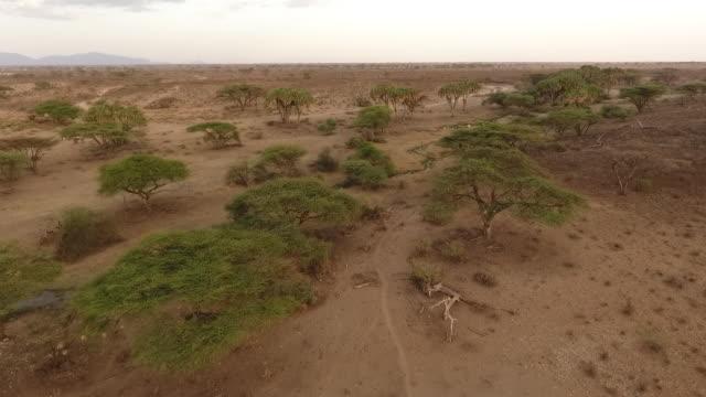 vidéos et rushes de aerial drone view of elephants grazing - paysage afrique