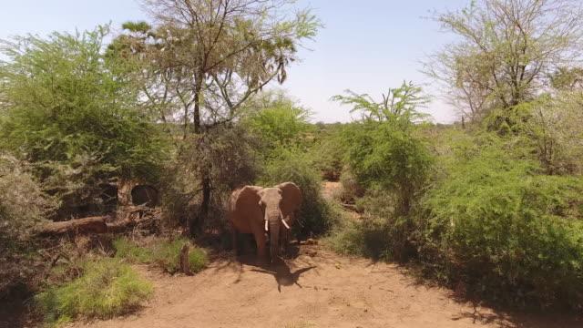 vídeos de stock, filmes e b-roll de aerial drone view of elephants in the wild - grupo pequeno de animais