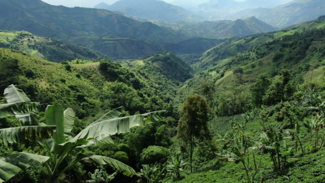 aerial drone view of forest, mountains and rolling green hills - colombia stock videos & royalty-free footage