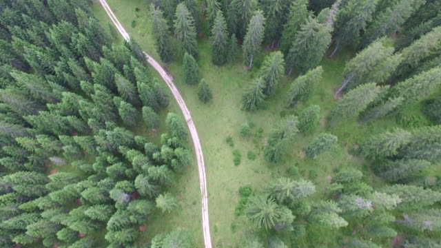 vidéos et rushes de aerial drone view of forest with hikers ascending road - land