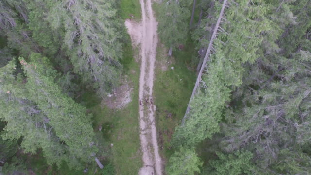 Aerial drone view of forest with hikers ascending road