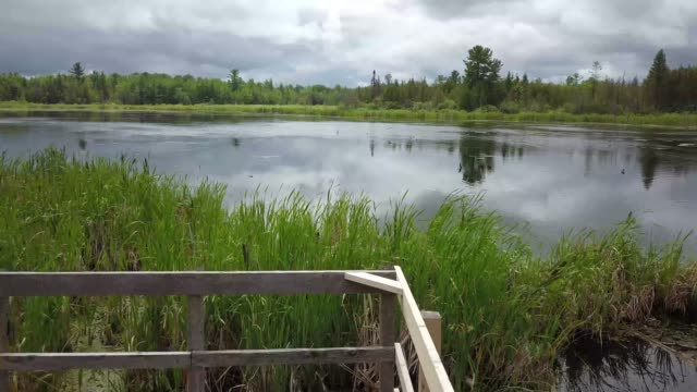 aerial drone view of green belt on a summer day in ottawa, ontario - reed grass family stock videos & royalty-free footage