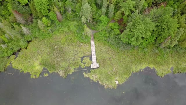 aerial drone view of green belt on a summer day in ottawa, ontario - swamp stock videos & royalty-free footage