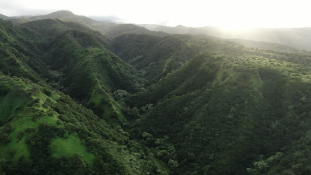 vídeos de stock, filmes e b-roll de aerial drone view of green mountains near ocean coastline - folhagem viçosa