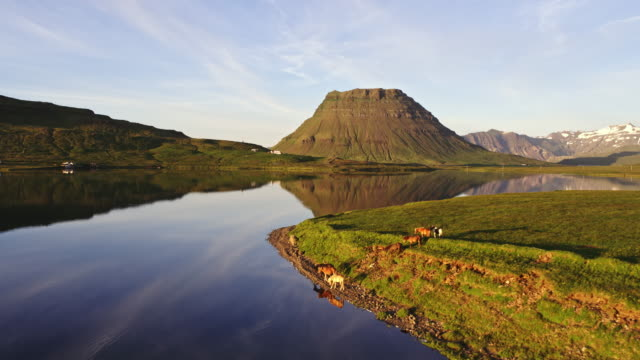 aerial drone view of horses and mountain at sunset, iceland - 湖点の映像素材/bロール