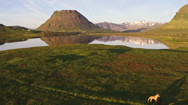 aerial drone view of horses and mountain at sunset, iceland - medium group of animals stock videos & royalty-free footage