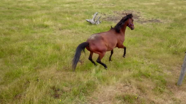 aerial drone view of horses galloping through field - wildlife reserve stock videos & royalty-free footage
