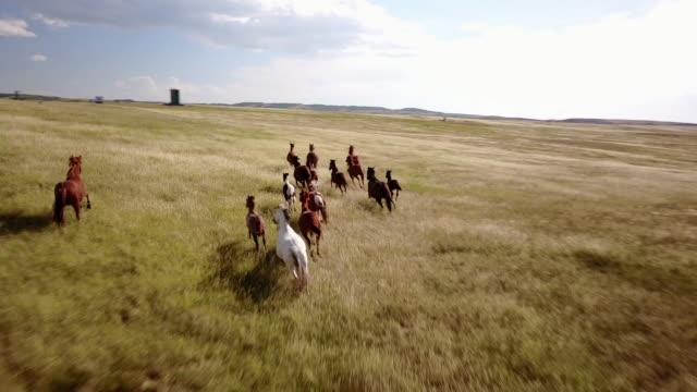 Aerial drone view of horses galloping through field