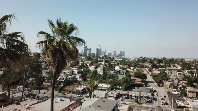 aerial drone view of los angeles with palm trees - city of los angeles stock-videos und b-roll-filmmaterial