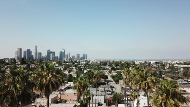 aerial drone view of los angeles with palm trees - downtown district stock videos & royalty-free footage