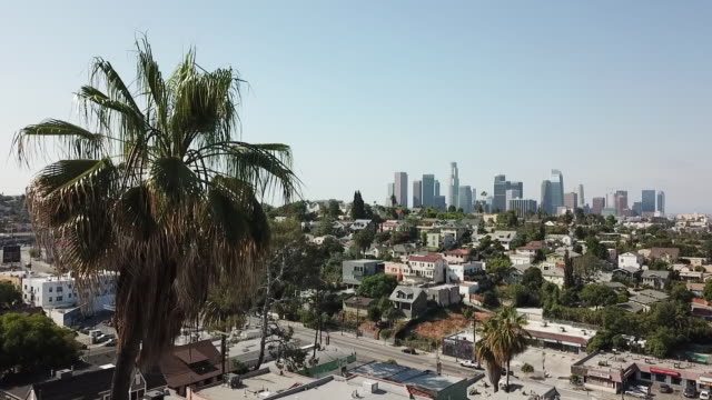 aerial drone view of los angeles with palm trees - southern california stock videos & royalty-free footage