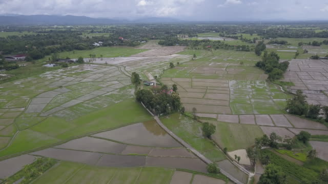 aerial drone view of rice fields in northern thailand. - paddy field stock videos & royalty-free footage