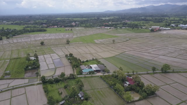 aerial drone view of rice fields in northern thailand - reisfeld stock-videos und b-roll-filmmaterial