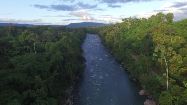 Aerial drone view of river in rainforest at sunset