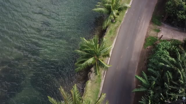 vídeos de stock e filmes b-roll de aerial drone view of road by the sea with palm trees - árvore tropical