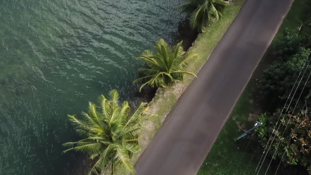 Aerial drone view of road by the sea with palm trees