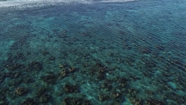 vídeos de stock, filmes e b-roll de aerial drone view of sea with waves and barrier reef in french polynesia - polinésia francesa