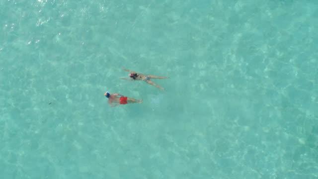 aerial drone view of snorkeling in moorea tropical island. - moorea stock videos & royalty-free footage
