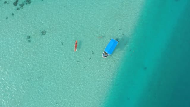 aerial drone view of snorkeling in moorea tropical island. - french polynesia stock videos & royalty-free footage