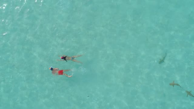 aerial drone view of snorkeling in moorea tropical island. - stechrochen stock-videos und b-roll-filmmaterial