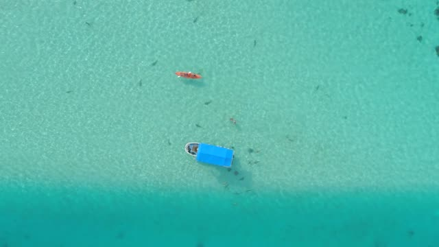 aerial drone view of snorkeling in moorea tropical island. - 小型船舶点の映像素材/bロール