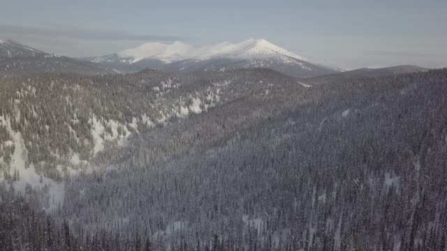 Aerial drone view of snow covered forest and mountains