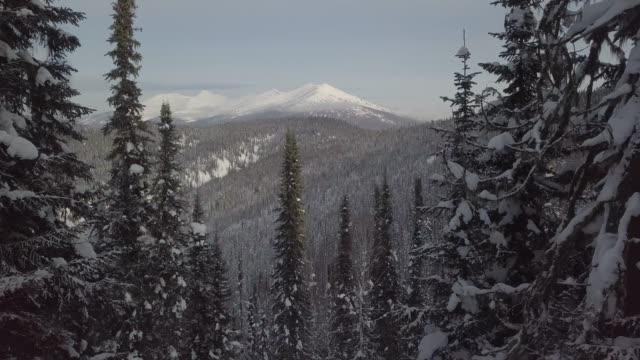 森や山に雪の空中ドローン ビューが覆われて - winter点の映像素材/bロール