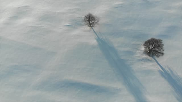 aerial drone view of snow covered hill and trees. - terra brulla video stock e b–roll