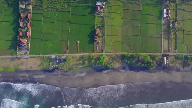 vídeos de stock, filmes e b-roll de aerial drone view of the green farming fields, beach and sea in indonesia. - mais zoom