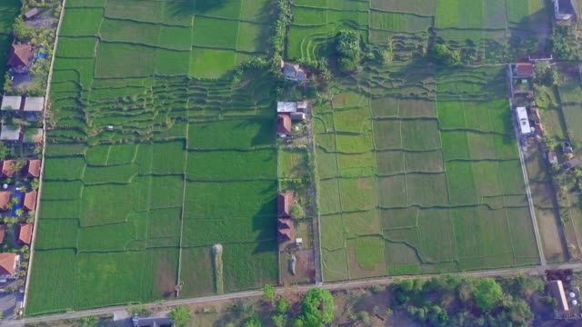 aerial drone view of the green farming fields, beach and sea in indonesia. - goodsportvideo stock videos and b-roll footage