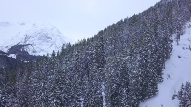 aerial drone view of trees and a forest in the snow covered mountains. - austria stock videos & royalty-free footage