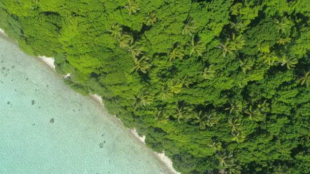 aerial drone view of trees and scenic tropical islands in french polynesia. - pacific ocean stock-videos und b-roll-filmmaterial