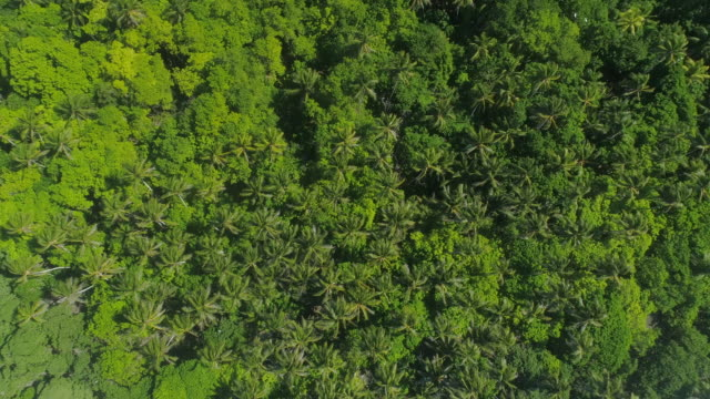 Aerial drone view of trees and scenic tropical islands in French Polynesia.