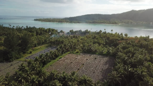 aerial drone view of trees and scenic tropical islands in french polynesia. - french polynesia stock videos & royalty-free footage