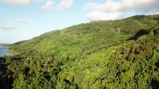 vídeos de stock e filmes b-roll de aerial drone view of tropical forest and fields and sea, lagoon - árvore tropical