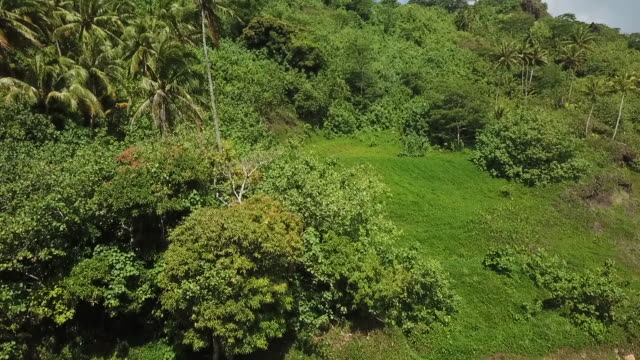 vidéos et rushes de aerial drone view of tropical forest and fields - dom tom