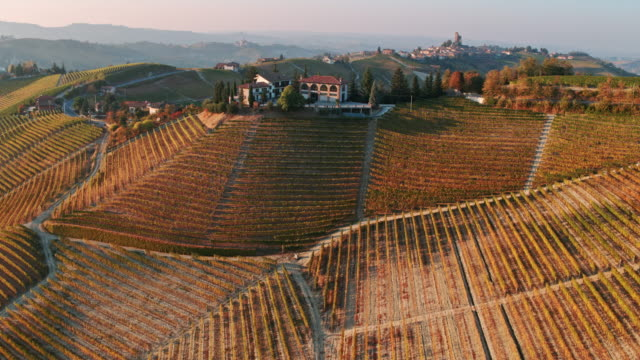 aerial drone view of vineyards in autumn, langhe, piedmont, italy - piemonte video stock e b–roll