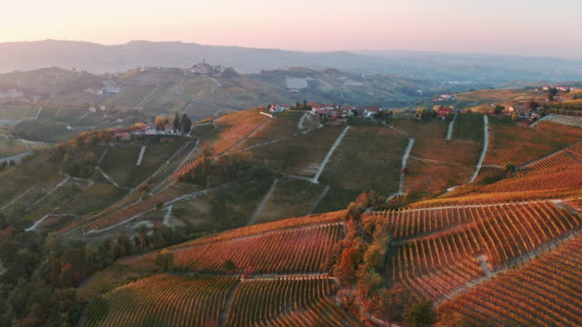 Aerial drone view of vineyards in autumn, Langhe, Piedmont, Italy