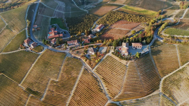 aerial drone view of vineyards in autumn, langhe, piedmont, italy - piedmont italy stock videos & royalty-free footage